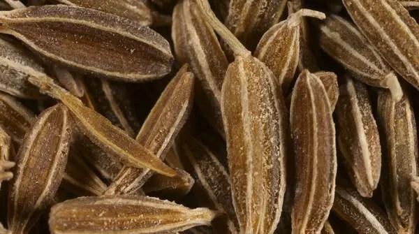 Ricerca indica i semi di cumino un rimedio contro il decadimento cognitivo