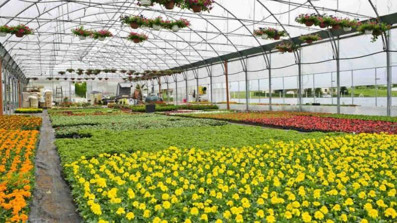 Il settore del florovivaismo al collasso