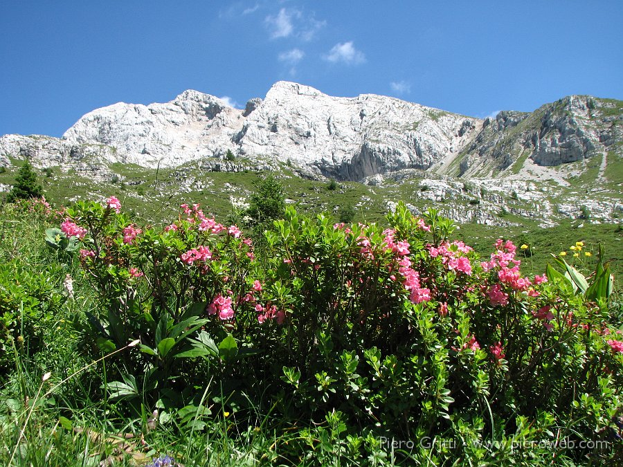 Il Sentiero dei fiori nelle Prealpi Orobie