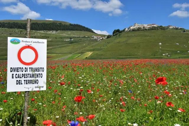 I visitatori a Castelluccio ed i danni ai campi in fiore