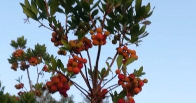 Il frutteto della biodiversità e delle varietà antiche