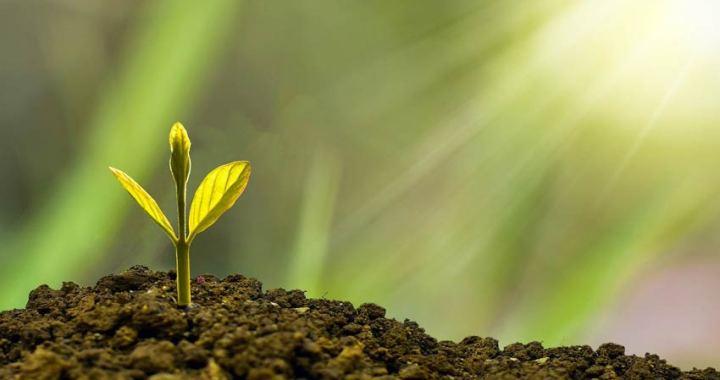 Treedom alcanza el millón y medio de árboles plantados en 2020