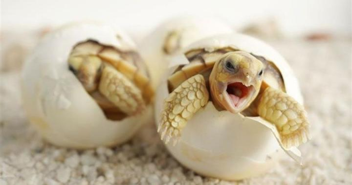 El empresario Juan Ferri apuesta por la conservación de las tortugas marinas