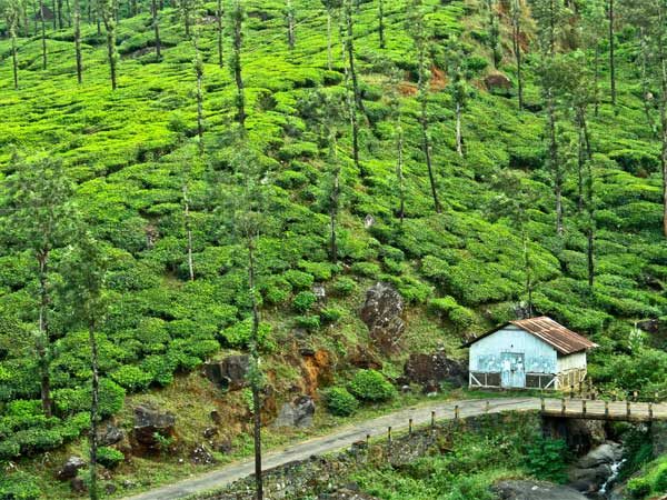 Monsoon destination in India- Wayanad