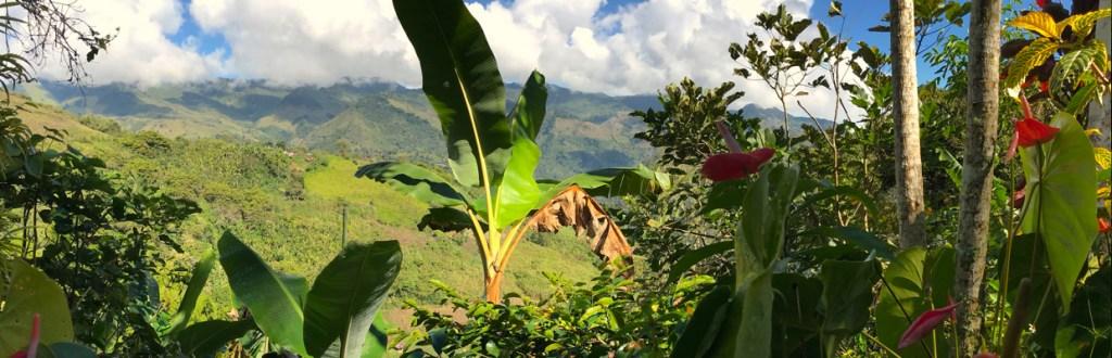L'importance d'un écosystème équilibré dans la culture du café