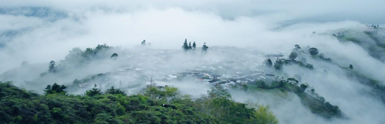 Café de spécialité d'altitude Colombie Agroforesterie