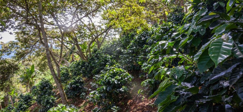 Critères Agriculture Biologique protection de zones forestières