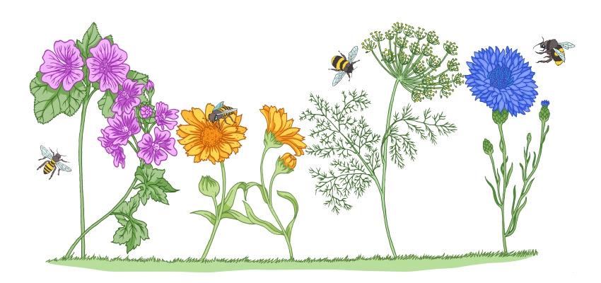 Fiori apicoltura