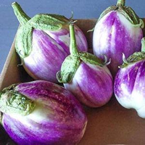 Farmerly 100 Seeds Rosa Bianca Eggplant – Heirloom Vegetable – Mild Bitter Free Flavor