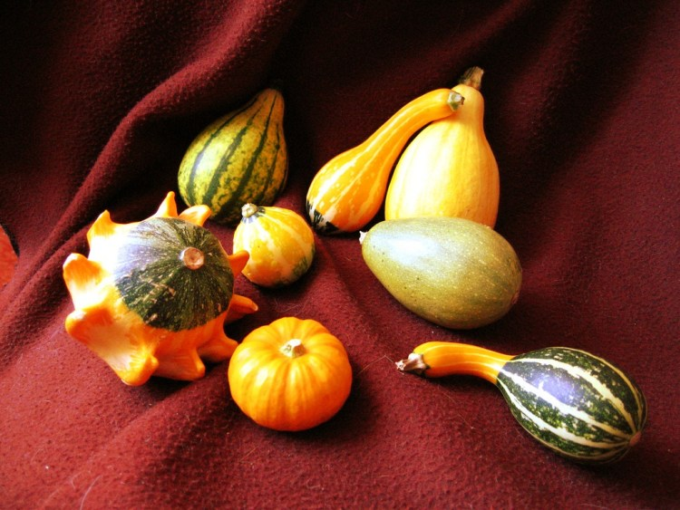 coloquintes courges toxiques