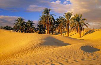Deserti, caratteristiche e diversità