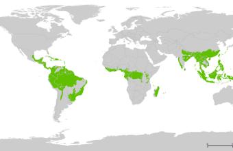 Foresta Pluviale, cos'è?