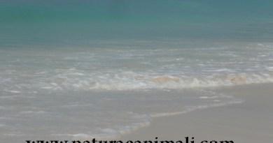 mare, oceani,
