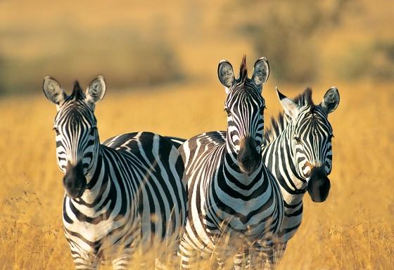 Animali nel mondo regno degli animali natura e animali