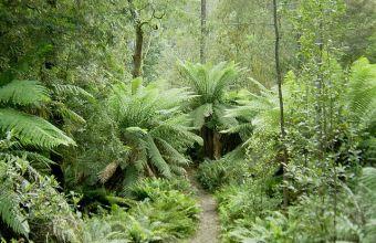 Le Foreste ecosistemi e biodiversità