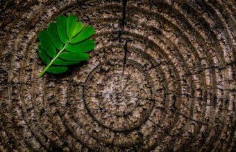 Albero: come stabilire l'età degli alberi