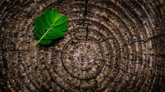albero calcolare età degli alberi