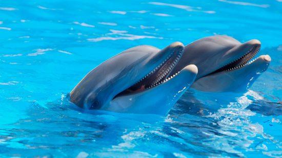delfini il delfino