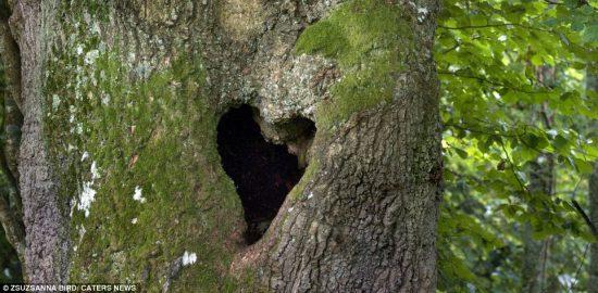 natura festeggia san valentino 6