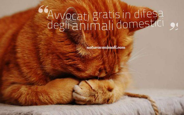 Avvocati gratis in difesa degli animali domestici