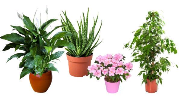 Piante Benefiche Da Appartamento.Le Piante Da Appartamento Come Sceglierle Natura E Animali