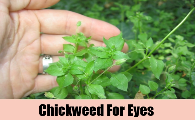 Chickweed For Eyes