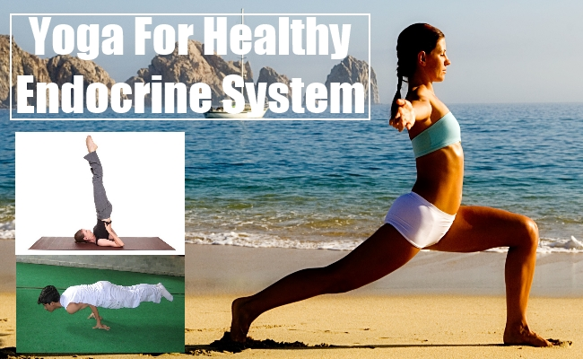Healthy Endocrine System