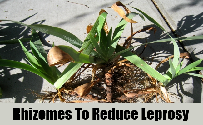 Rhizomes To Reduce Leprosy