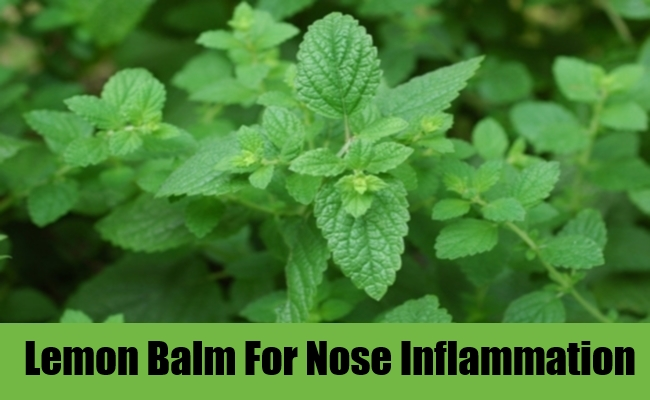 Lemon Balm For Nose Inflammation