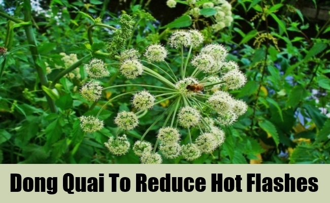 Dong Quai To Reduce Hot Flashes