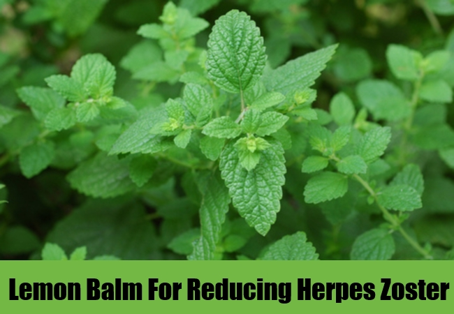 Lemon Balm For Reducing Herpes Zoster