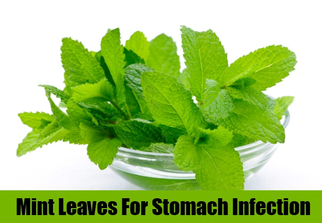 Mint Leaves For Stomach Infection