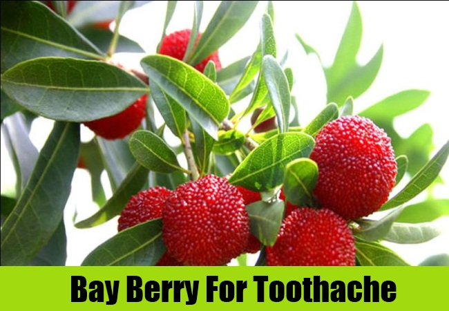 Bay Berry For Toothache