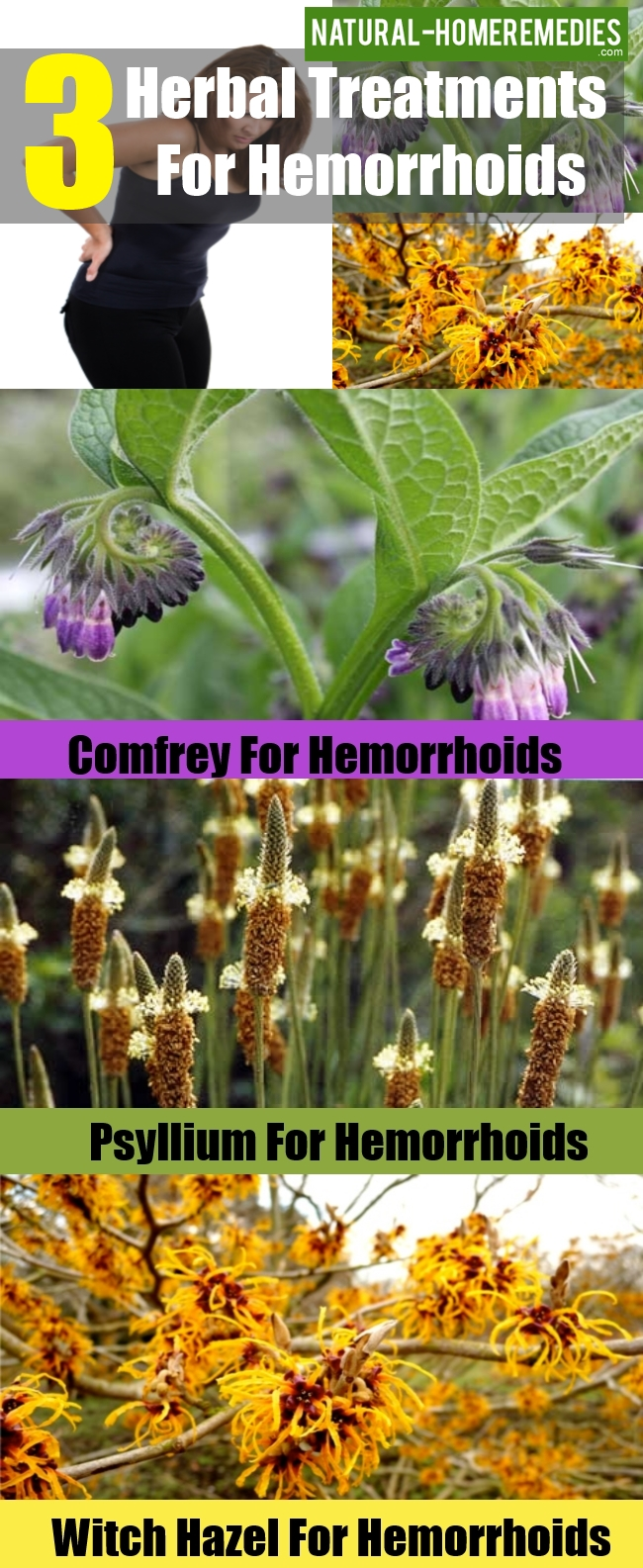 Herbal Treatments For Hemorrhoids
