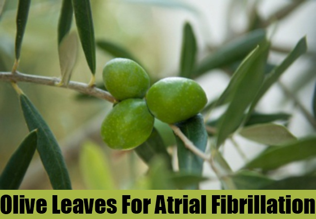 Olive Leaves For Atrial Fibrillation