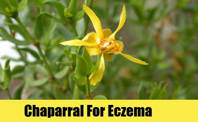 Chaparral For Eczema