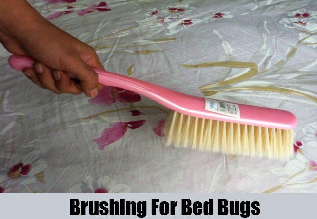 Brushing For Bed Bugs