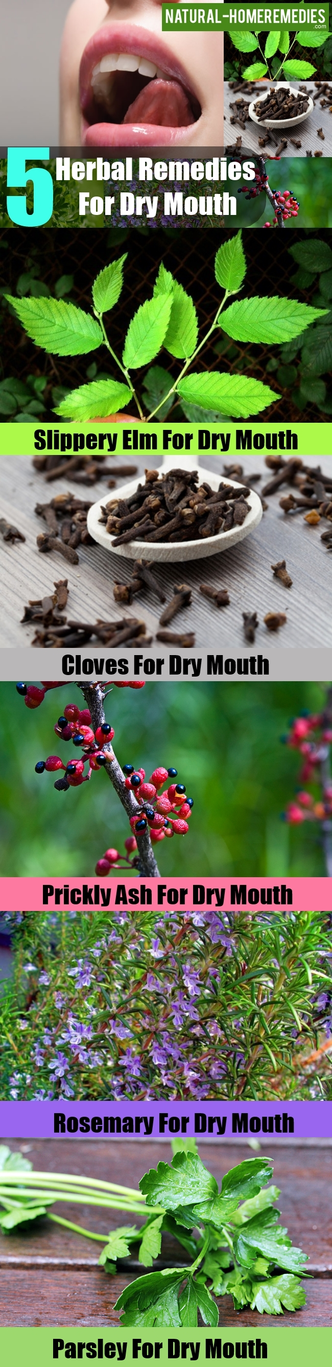 Herbal Remedies For Dry Mouth