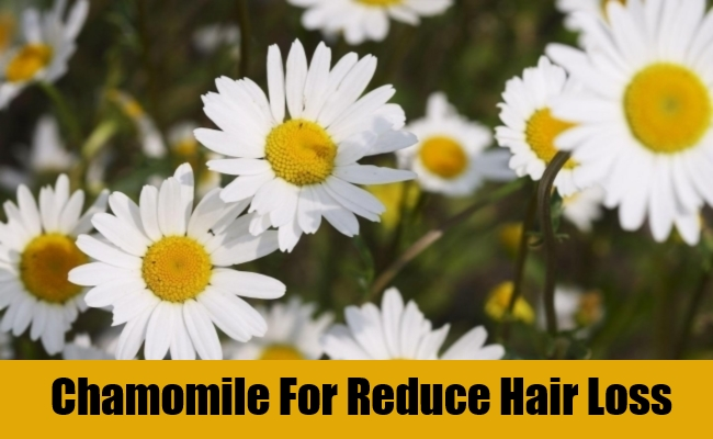 Chamomile For Reduce Hair Loss