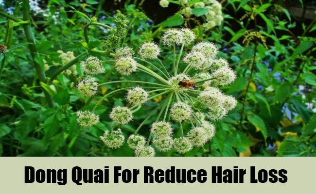Dong Quai For Reduce Hair Loss