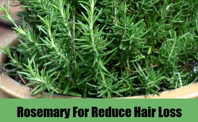 Rosemary For Reduce Hair Loss
