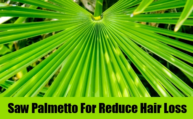Saw Palmetto For Reduce Hair Loss