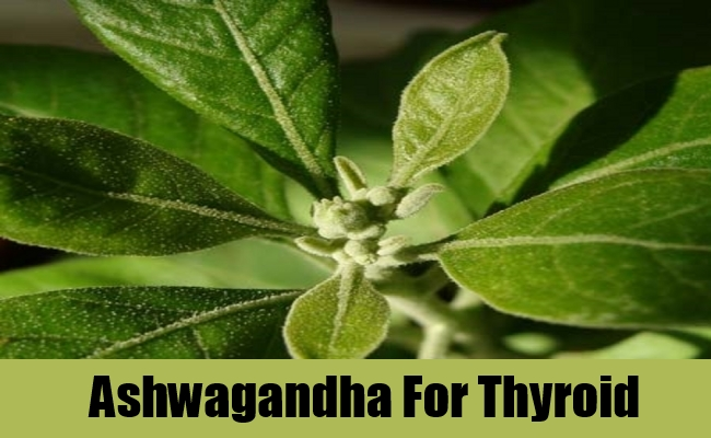 Ashwagandha For Thyroid