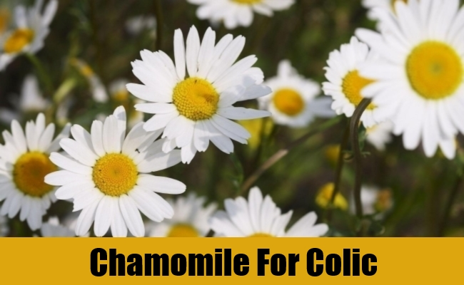 Chamomile For Colic