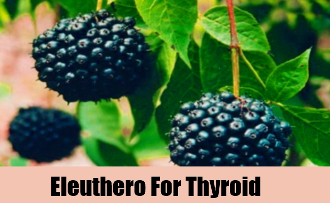 Eleuthero For Thyroid