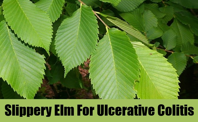 Slippery Elm For Ulcerative Colitis