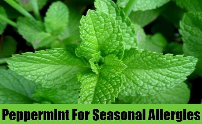 Peppermint For Seasonal Allergies