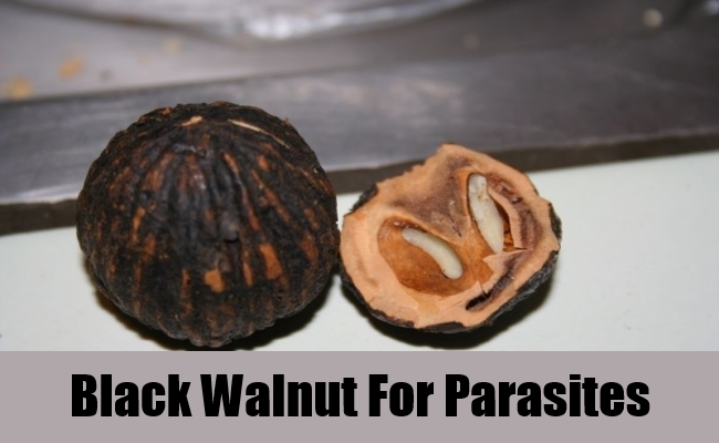 Black Walnut For Parasites