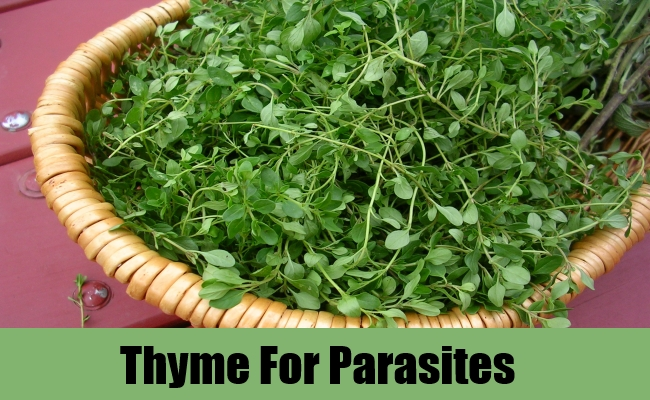 Thyme For Parasites
