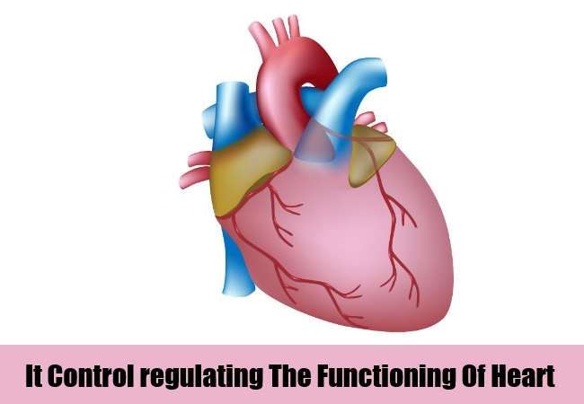 functioning of heart